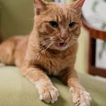 Werken zelfreinigende kattenbakken echt?